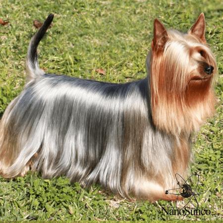 براق کننده پوست و موی سگ