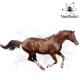 محافظ اگزمای اسب