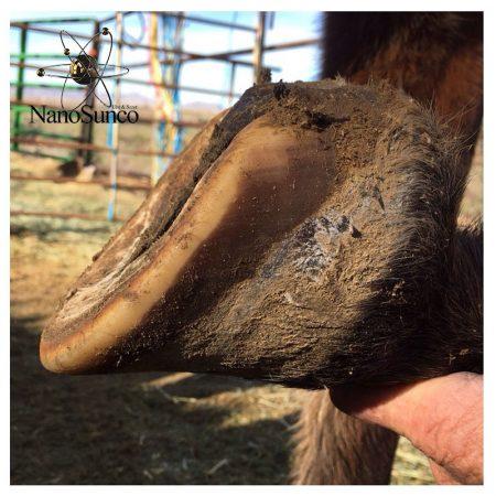 محافظ سفلای پای اسب
